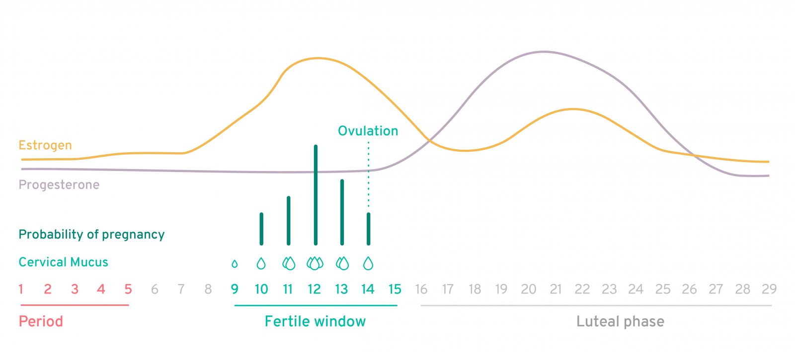 kegg_fertile_cycle_graph